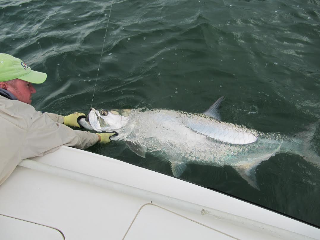 Bonefish and tarpon now release only fishing guides miami for Florida fishing regs